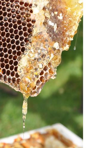 Faguri de miere
